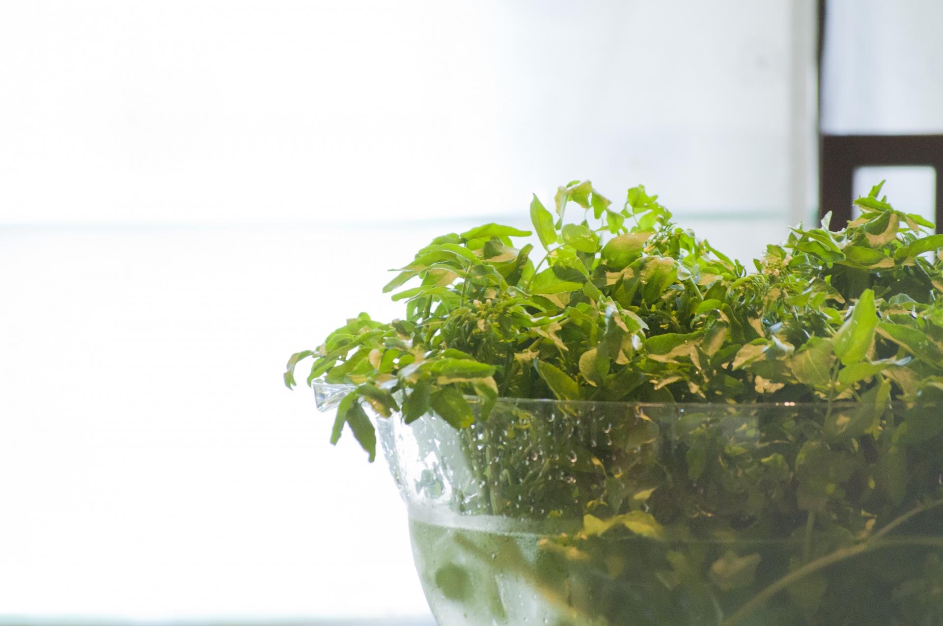 水耕栽培 オススメの野菜